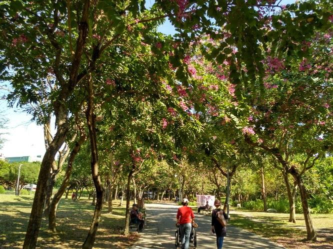 大安森林公園11